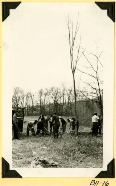 Fort Hill, planting elms in meadow photograph