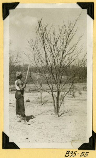 Fort Hill, trimming trees photograph