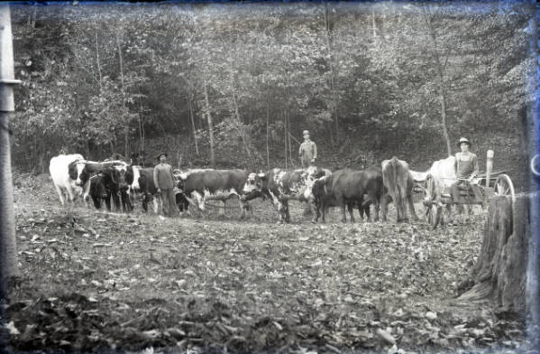 Men with cattle teams