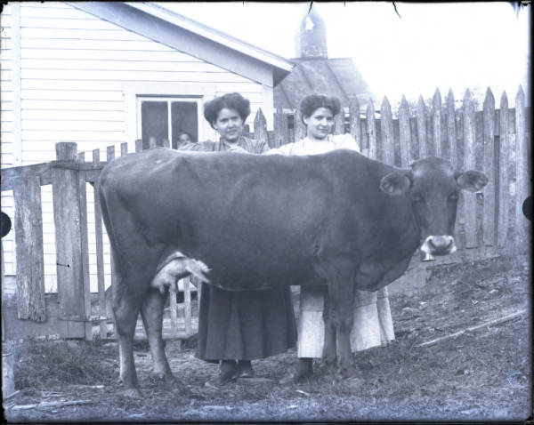 Two women with cow portrait