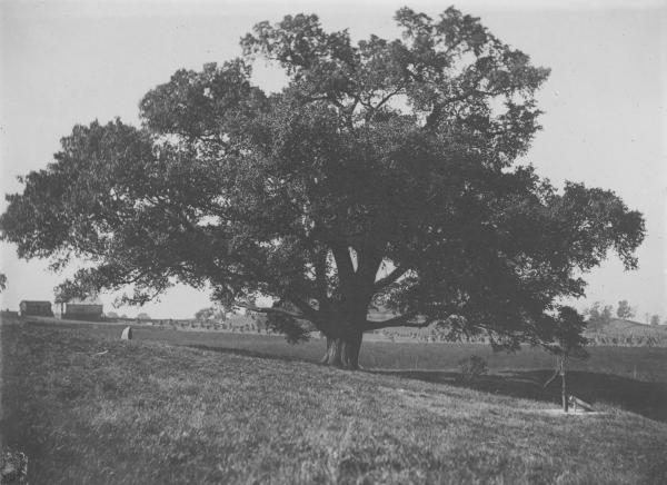 Logan Elm in Pickaway County, Ohio