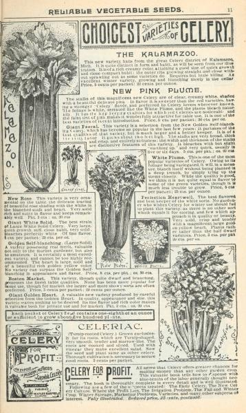 'Choicest Varieties of Celery' illustration