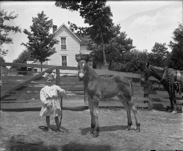 Young girl with foal photograph
