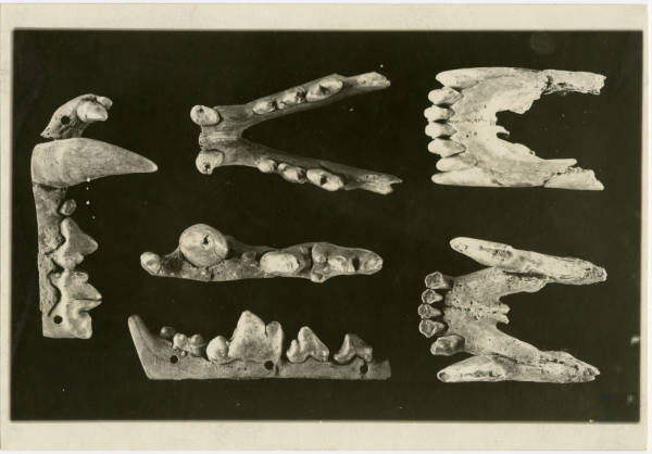 Animal jaw ornaments from Hopewell Mound Group