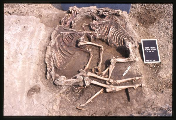 Horse burial at Fort Meigs
