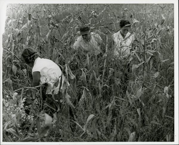 Inmates working in field photograph
