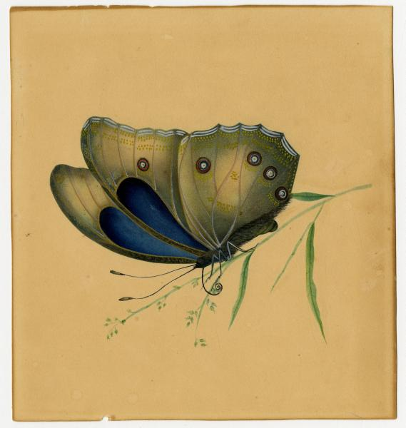 'Grey and Blue Butterfly' painting