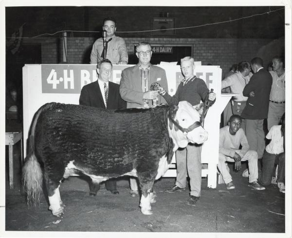 Beef cattle 4-H show at the Ohio State Fair photograph