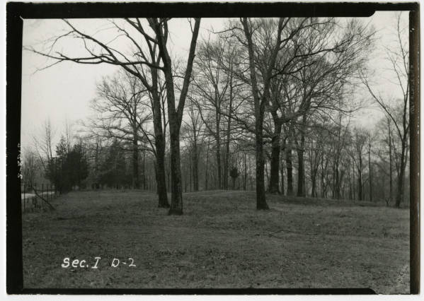 Fort Ancient tree grove photograph