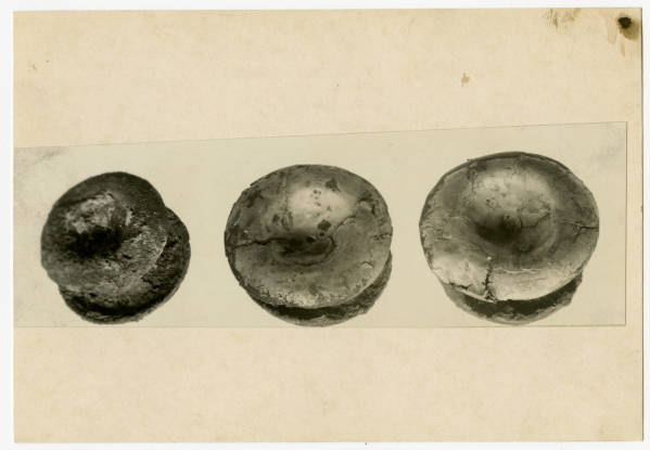 Hopewell Mound Group copper and iron ears spools photograph