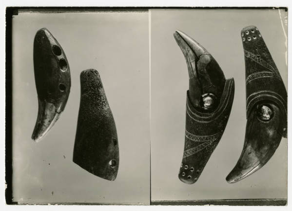 Bear teeth from Hopewell Mound Group photograph