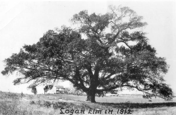 Logan Elm photograph