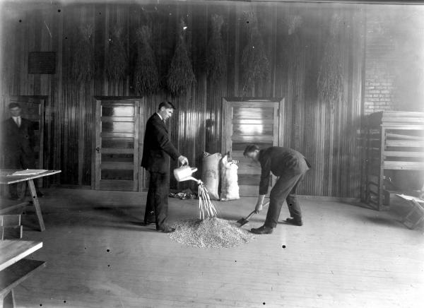 Treating seed grain for smut photograph