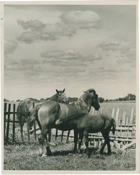 Mare and colt photograph