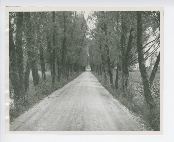 Tree lined road in Logan County, Ohio