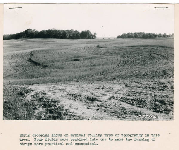 Strip cropping in Ohio