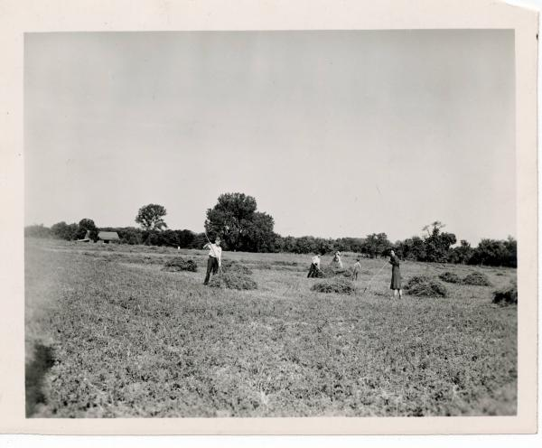 People working in a hay field in Warren County