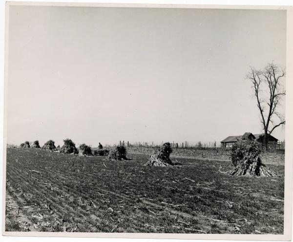 Man picking corn in Warren County, Ohio